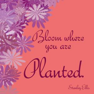 bloom-where-you-are-planted-72